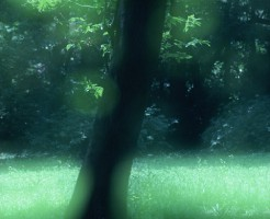 大きな木のシルエット
