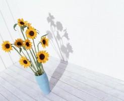 花瓶の向日葵