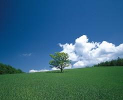 青空と1本の木